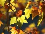 foglie_autunno.jpg